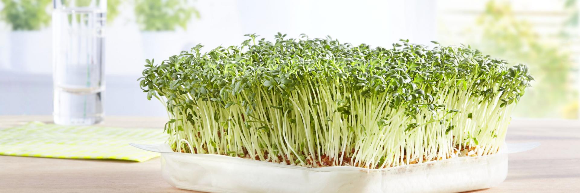 Grünländer Grüne Tipps